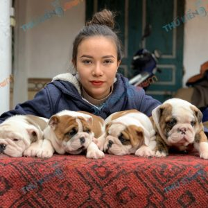 giong-cho-english-bulldog-45-ngay-tuoi-xuat-chuong-thang-3-2021-3