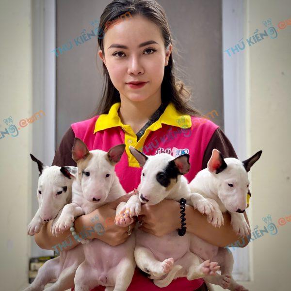 giong-cho-bull-terrier-cho-suc-bo-40-ngay-tuoi-xuat-chuong-thang-7-2021-10