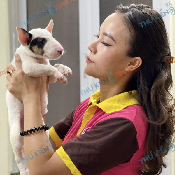 giong-cho-bull-terrier-cho-suc-bo-40-ngay-tuoi-xuat-chuong-thang-7-2021-2