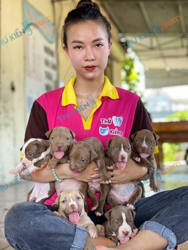 giong-cho-american-pitbull-terrier-30-ngay-tuoi-xuat-chuong-thang-8-2021-1