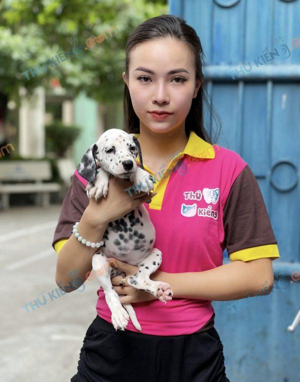 giong-cho-dalmatian-cho-dom-40-ngay-tuoi-xuat-chuong-thang-7-2021-4