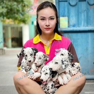 giong-cho-dalmatian-cho-dom-40-ngay-tuoi-xuat-chuong-thang-7-2021-2