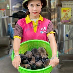 giong-cho-malinois-berger-bi-10-ngay-tuoi-xuat-chuong-thang-8-2021-4