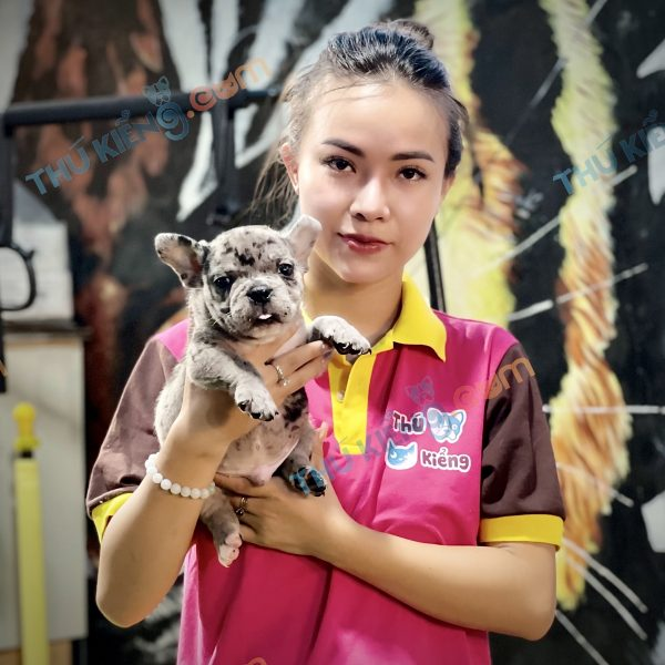 giong-cho-american-exotic-bully-40-ngay-tuoi-xuat-chuong-thang-7-2021-1