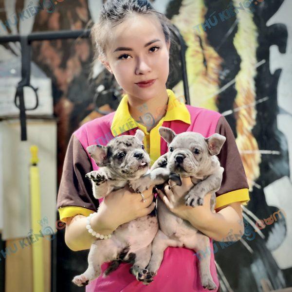 giong-cho-american-exotic-bully-40-ngay-tuoi-xuat-chuong-thang-7-2021-2