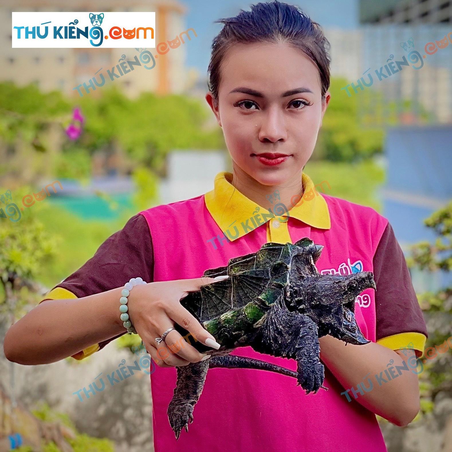 Rùa Alligator Snapping tại Thukieng.com