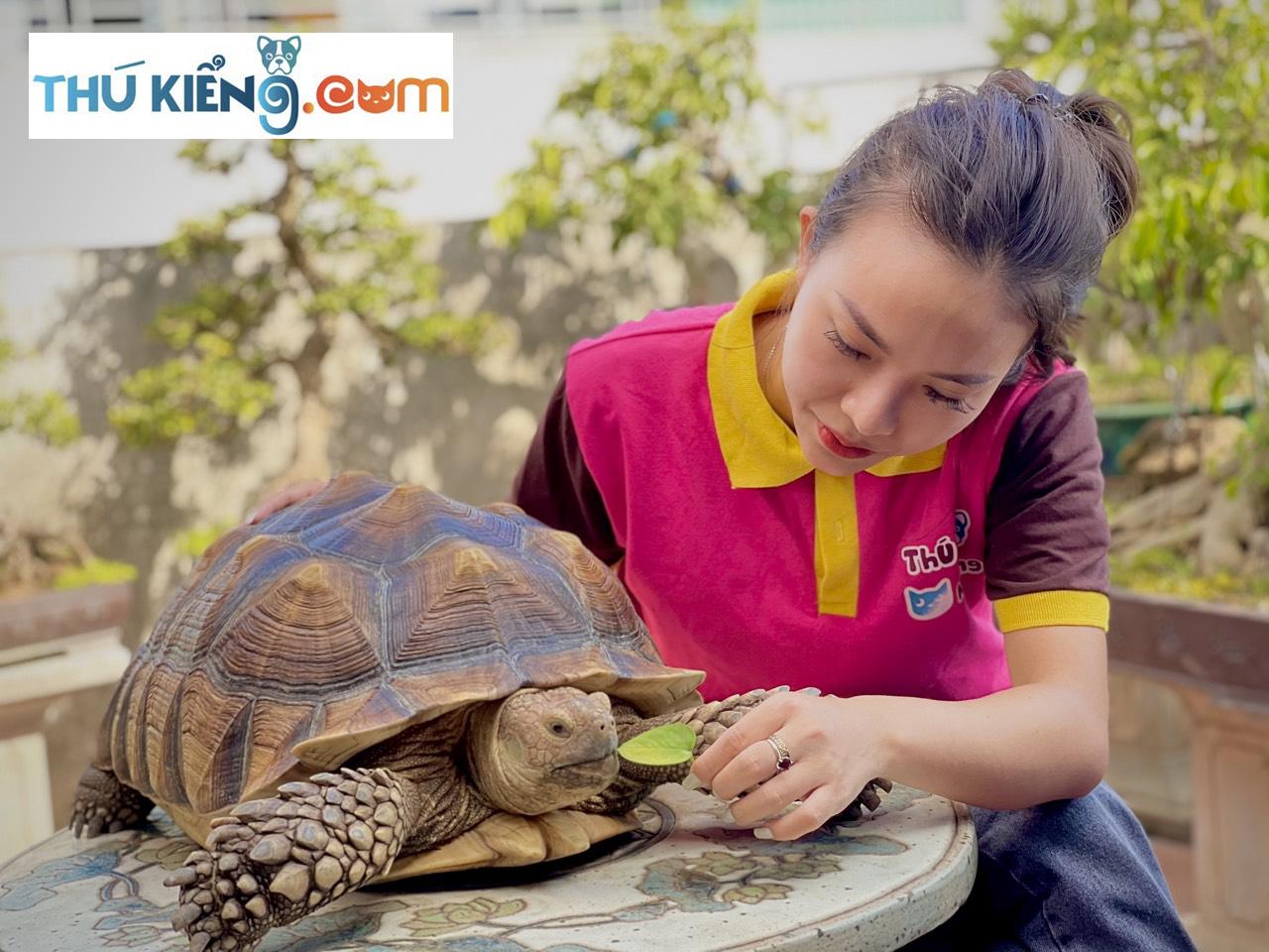 Rùa Sulcata - thú chơi thể hiện đẳng cấp