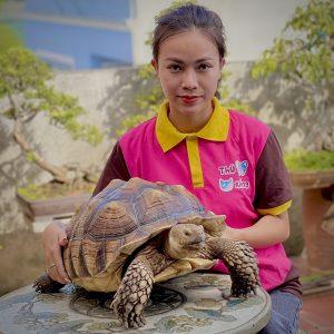 Chú ý chọn rùa khoẻ mạnh