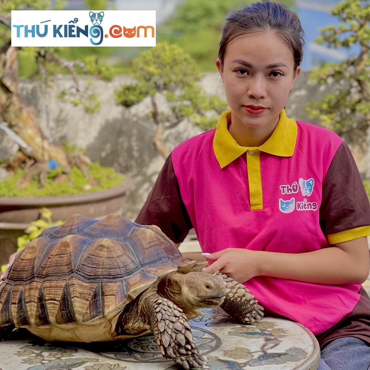 Chiêm ngưỡng vẻ đẹp rùa Sulcata