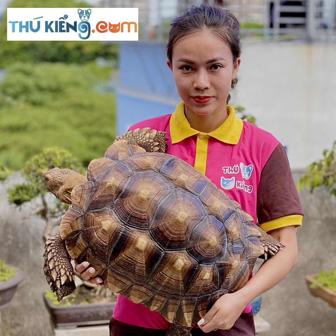 Hoa văn nổi bật trên mai rùa