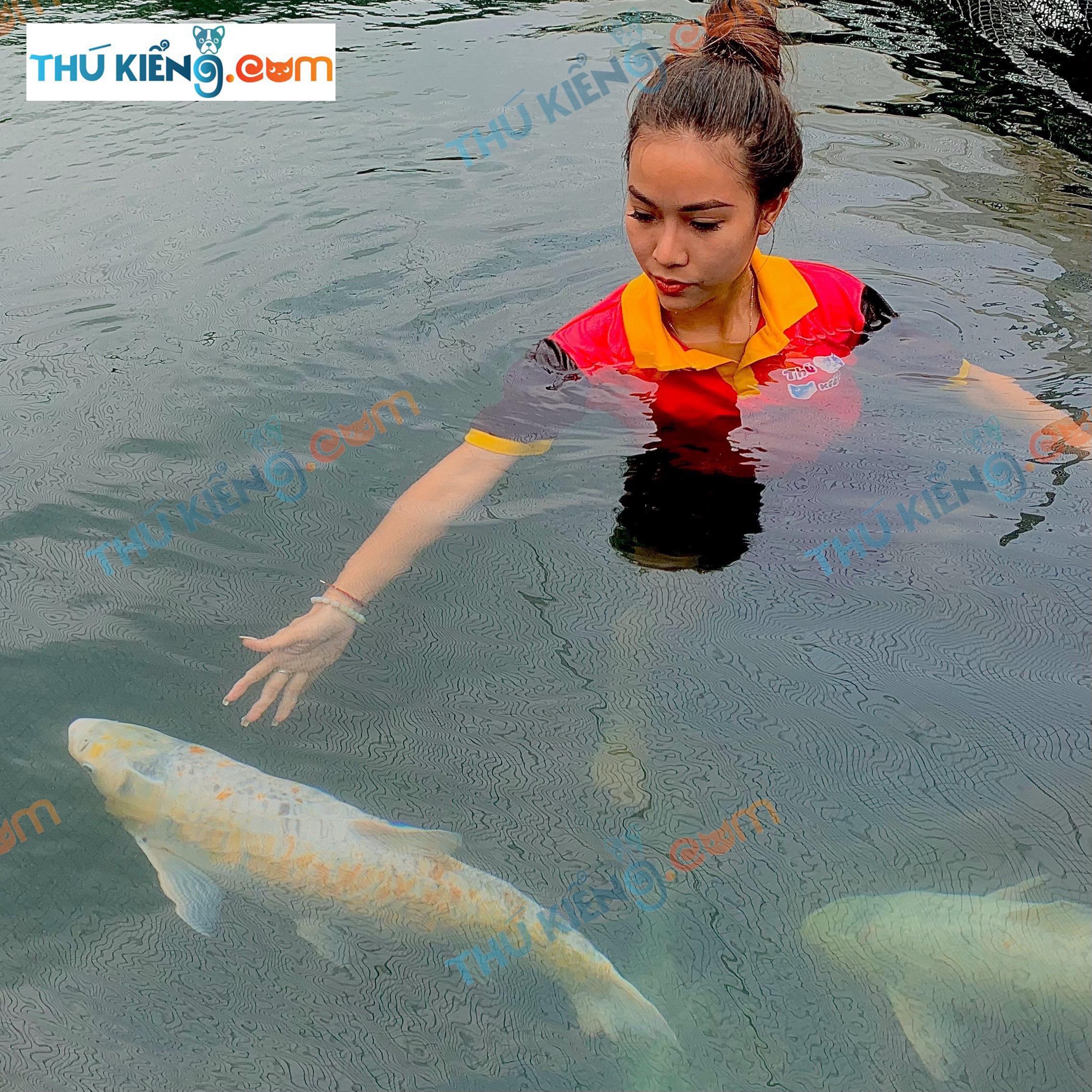 Cá Trắm đột biến rất dễ nuôi